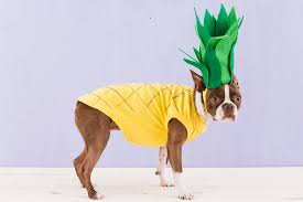 21 delightful diy dog halloween costumes page 2 of 4 the