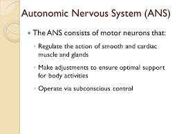 Ans Anatomy And Physiology The Nervous System I The Autonomic Nervous System Ans Anatomy