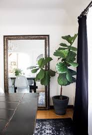 Home Interior Plants by Home Trends Indoor Plants Copycatchic