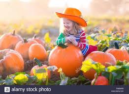 little picking pumpkins on halloween pumpkin patch child