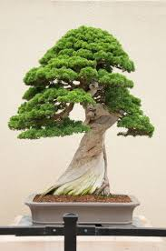 bonsai tree care meaning home decor and design