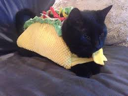 let u0027s all dress up like tacos for halloween huffpost