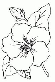 coloring pictures of hibiscus flowers color by number coloring pages for adults lily printable color