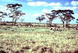 Tropical Savanna Dominant Plants - tropical savannah environment cultural anthropology ksu