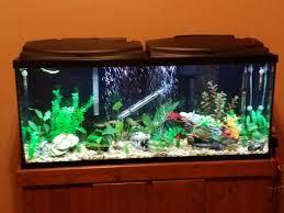 Aquarium Decoration Ideas Freshwater Ideas On Making My 55 Gallon Freshwater More Natural 183999