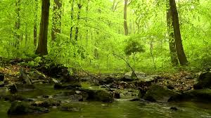 Beautiful Pictures Of Spring by 60 Minutes Of Woodland Ambiance Nature Sounds Series 4