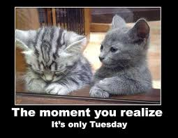 Awesome Quotes About Cats Being - its only tuesday quotes quote cats days of the week cute kittens