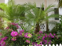 Tropical Climbing Plant - 29 best climbing plants images on pinterest beautiful flowers