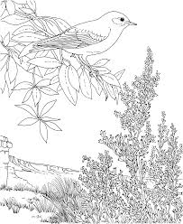 birds and flowers at bluebonnet flower coloring page with
