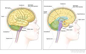 central nervous system tumors treatment pdq u2014patient
