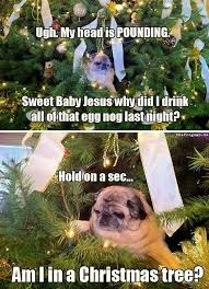 Christmas Dog Meme - pug in the christmas tree what breed is it