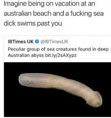 Australian Memes - dopl3r com memes imagine being on vacation at an australian