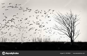 graphic image of a flock of birds flying away from a tree stock
