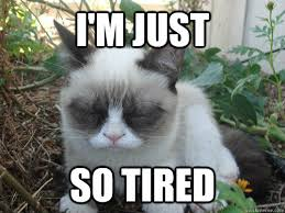 Tired Cat Meme - i m just so tired poor grumpy cat quickmeme