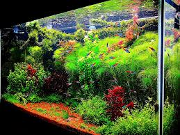 Aquarium Aquascapes Aquarium Aquascape Tropical Ocean Salfwater Aquarium Canopy