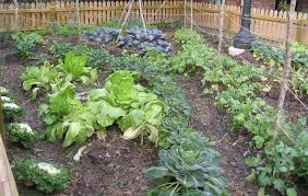 how to start a vegetable garden bed from scratch home outdoor