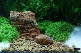 ghiaia per acquari dennerle 6902 plantahunter burma ghiaia naturale 12 15mm 5kg fondo