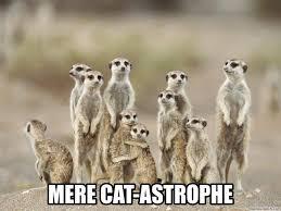 Mere Cat Meme - cat