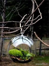 hanging glass globe terrarium kit