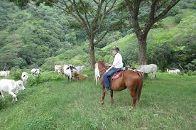 how far can a horse travel in a day images Horseback riding costa rica horse trek monteverde vacations jpg