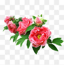 real flowers real flowers png images vectors and psd files free on
