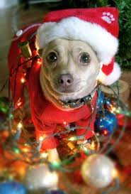 26 best christmas pets images on pinterest animals christmas
