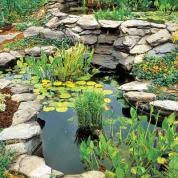 Backyard Pond Images Everything You Need To Know To Build The Perfect Backyard Pond