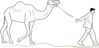 man leading camel coloring page free camel coloring pages