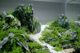 Mountain Aquascape 45cm Layout First Aquascape In China Also Pics Of Fish Market
