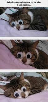 Googly Eyes Meme - so i put googly eyes on my cat when it was sleeping pictures