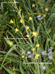 native plants of texas texas native plant week my gardener says u2026