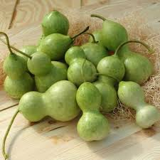gourd seeds grow gourds for fall harris seeds