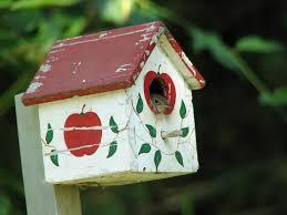 wren bird house plans birds of prey