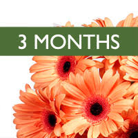 flower of the month club flower of the month club flowers plants gift baskets from