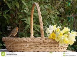 robin on flower basket with daffodils stock photo image 13227872