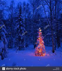 lit tree in forest at twilight sc alaska winter stock