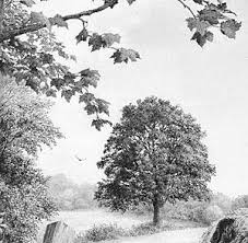 14 best trees sketch images on drawings pencil