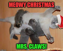 Funny Cat Meme Pictures - funny cat memes imgflip