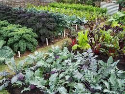 guide to basic gardening