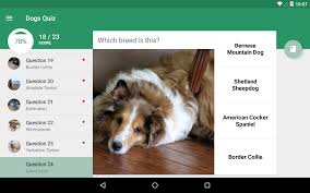 australian shepherd quiz breedmaster android apps on google play