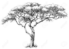 african tree marula tree royalty free cliparts vectors and