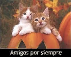 imagenes de gatitos sin frases frases para el día del amor y la amistad dralive