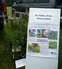 native alternatives to invasive plants 2 more plants sales coming up this month u2013 fiddlehead creek native