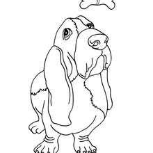 basset dog coloring pages hellokids