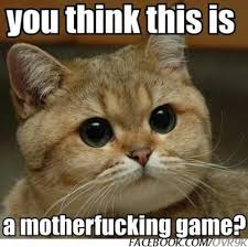 Cat Memes Tumblr - funny cat memes google search memes pinterest funny cat