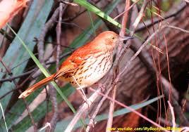 backyard birding and nature february 2014