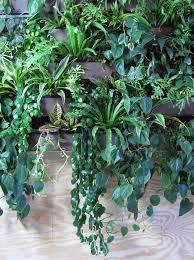 Urban Wall Garden - how to turn a brooklyn loft into an urban oasis gardenista