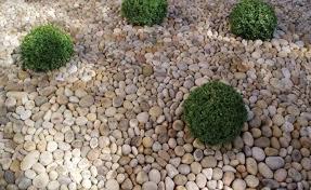 coral charm as an ornamental garden kitchen ideas