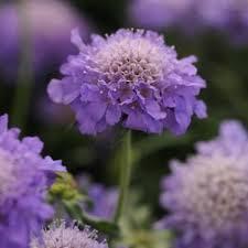 538 best garden images on pinterest garden plants flowers and