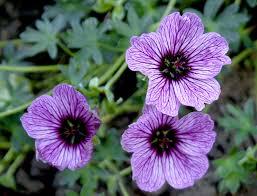 Flowers That Keep Mosquitoes Away Improve Your Outdoors Experience With Mosquito Repelling Plants